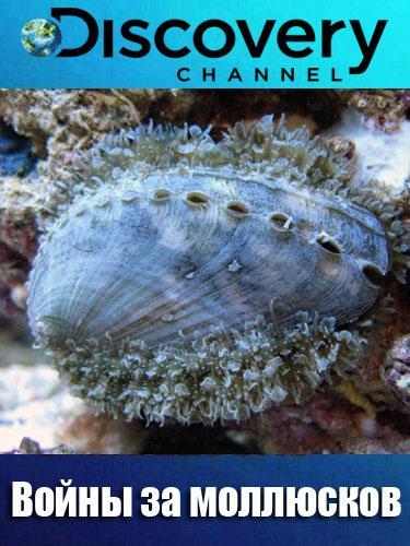 Discovery. Войны за моллюсков / Dive Wars Australia [02х01-03] (2014) HDTVRip 720p от GeneralFilm