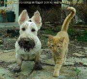 Позитивные котэ и их друзья (27.08.15)